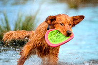 """Finn"" Frisbee Catch"